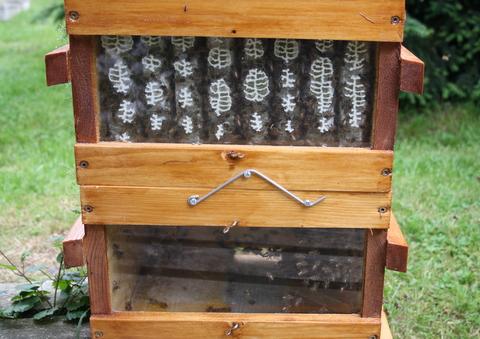 Formation apiculture ruche abbe warre nord pas de calais