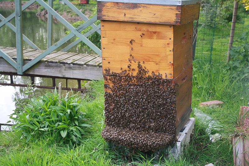 Formation apicole