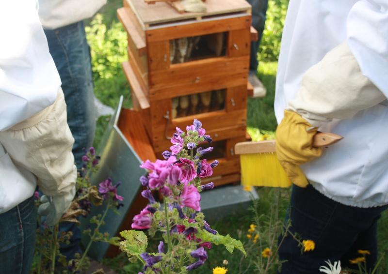 formation apicole de loisirs