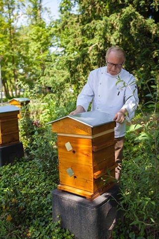 Installation ruche Marc Meurin