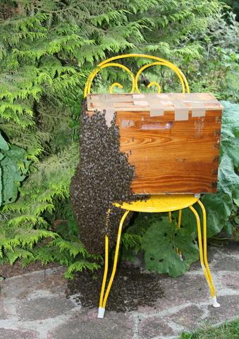 recuperation essaim abeille nord pas de calais
